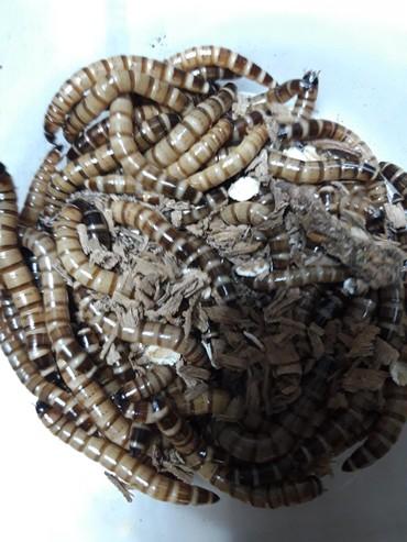 сетка от птиц в Кыргызстан: Зоофобусы, для птиц и рептилий. 0555433332 / 0705433338