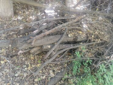 34 объявлений: Продаю дрова. На 2 портера груз цена 5 тыс сом