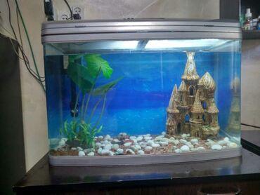 Животные - Бактуу-Долоноту: Продам аквариум со всем оборудованием. Объем 130 литров