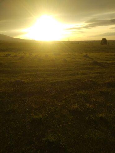 Ищу пастуха желательно семя 600 голов баран пасти в горах на фозенди