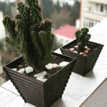 konteyner ofis - Azərbaycan: Kaktus sereus balaca ve boyuk qab Balaca -6 man Boyuk - 12 man Ev ve o