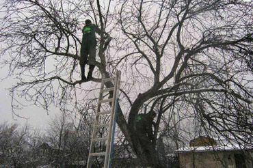 Спил,обрезка деревьев.Расчистка в Бишкек