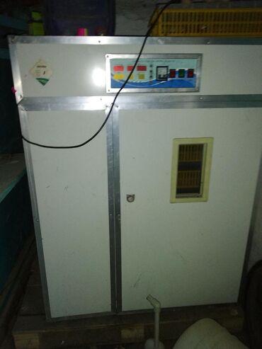 Животные - Дачное (ГЭС-5): Инкубатор 500 щт