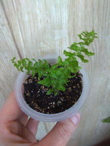 Любое растения  Самовывоз мкр Асанбай