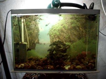 Продаю аквариум(25-30 л.) со всем содержимым. в Бишкек
