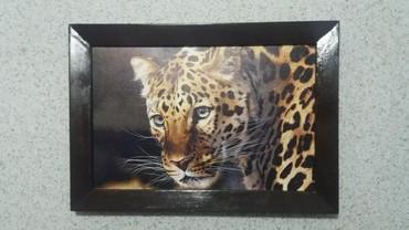 """Картина """"Леопард"""". Печать на холсте. декор стены. размеры: 30х42 см"""
