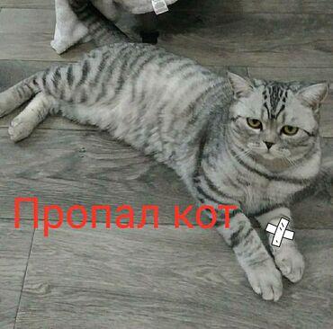 мрамор бишкек в Кыргызстан: В районе ветеринарной клиники Гаухар (в Бишкеке)на Горького, (ЮГ2)
