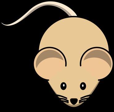 Электрокот от крыс мышей гарантия 6месец производства Россия.Станислав в Бишкек