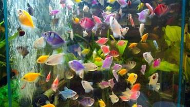 со всеми комплектующими в Кыргызстан: Привет всем. Хочу приобрести аквариум с рыбками. С детства мечтал