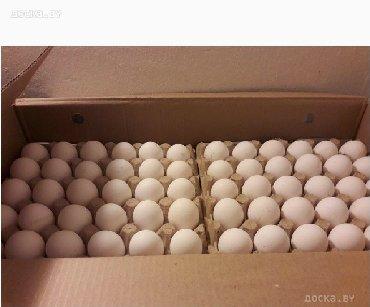 Продаю яйцо инкубационное бролер Кобб 500.Арбор акрос.Росс 308