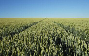 Продам соток Для сельского хозяйства от собственника