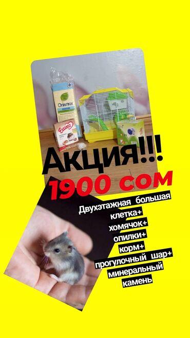 ручной отпариватель бишкек in Кыргызстан   УТЮГИ: Акция !!!ВЕСЬ КОМПЛЕКТ Сюда входит:-большая двухэтажная клетка с