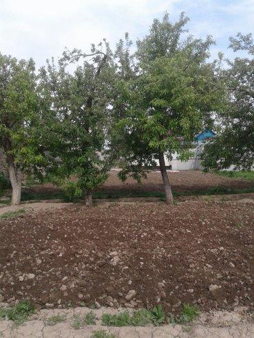копаю огород мотоблоков    1 сотка 300 в Бишкек