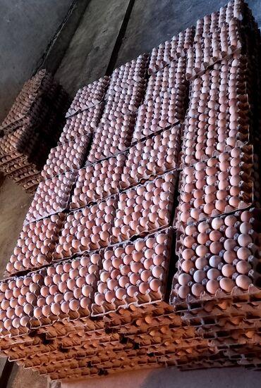 34 объявлений: Куриное яйцо (кремовое) оптом 6.50От 50-60 граммМестное, с собственной