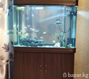 Продаю заводской аквариум, на 180 литров.(ширма) в полном комплекте, с