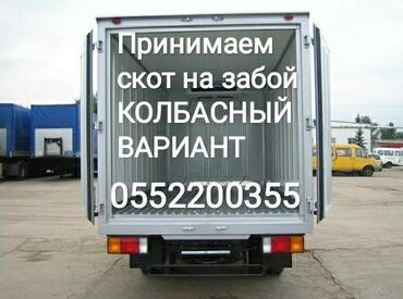 цех по производству сыра в Кыргызстан: Принимаем дорого в колбасный цех в любой упитанности