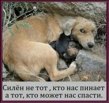 Отдаю в добрые руки собак мелких и в Бишкек