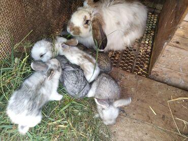 22 мая Будут готовы кролята маленькие возраст месяц