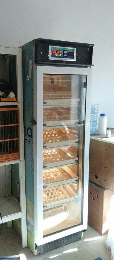 Bakı şəhərində Inkybaror Tam avtomat 1000 yumurta tutumlu inkubator satiram.