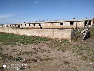 мал-сарай в Кыргызстан: Куплю сарай кашара в московском районе желательно .можно сокулук или
