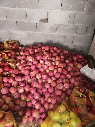 24 объявлений   ОТДЫХ НА ИССЫК-КУЛЕ: Номер, яблаки Жети-Огуз