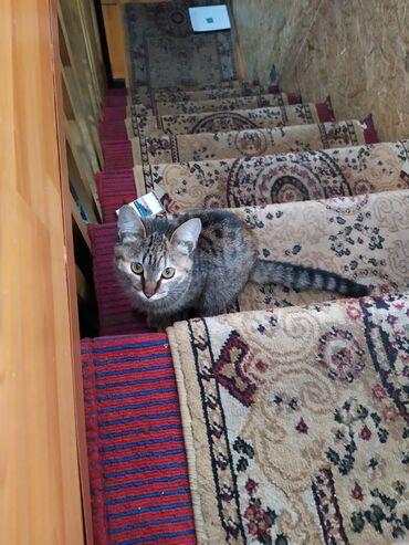 Отдам котенок кошка кашыргуль умная игривая в туалет ходит только не
