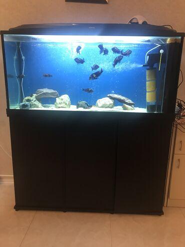 uşaqlar üçün uzunqol futbolkalar - Azərbaycan: Zavod Akvarium ! Dünyanın ən yaxşı akvarium firması AQUEL istehsalıdır