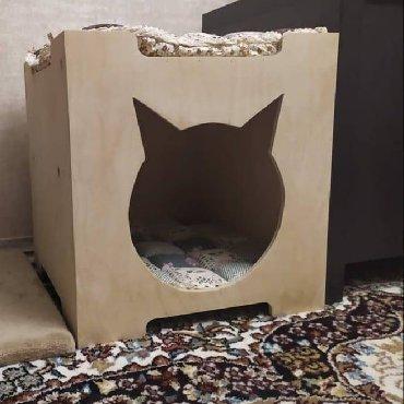 кошка персидская шиншилла в Кыргызстан: Продаю домик для кошки