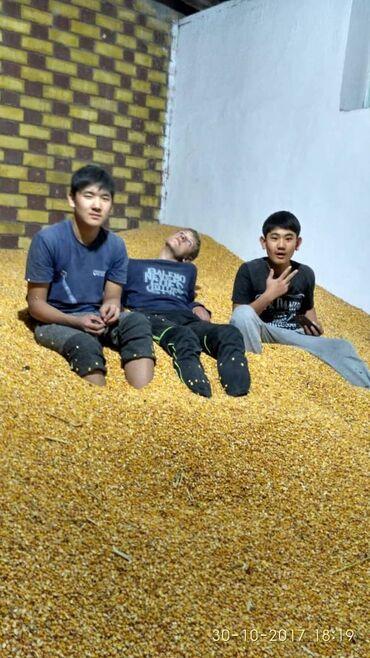 акриловые краски для ванны цена в Кыргызстан: Продаю кукурузу,сорт пионер.г.Кант