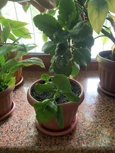 Продам комнатные растения ( названий к сожалению не знаю ) только