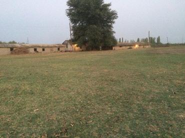 Ucar şəhərində Ucar rayonu Qazyan kendinde 500 sot sahesi olan ferma satilir Ferma