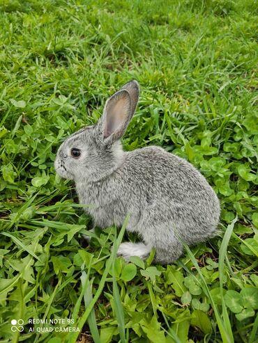 Продаю | Крольчата | Для разведения