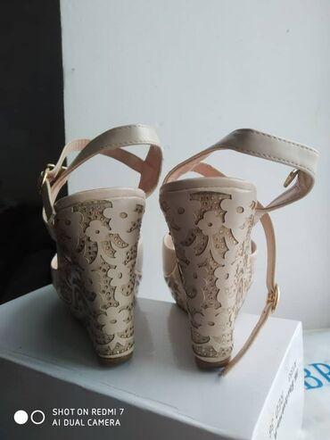 Находки, отдам даром - Новопавловка: Поменяю на комнатную цветы отличном состоянии