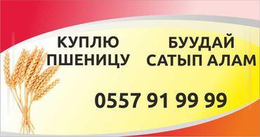 куплю-клетку-для-попугая в Кыргызстан: Куплю пшеницу!