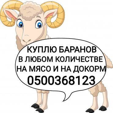 Животные - Бишкек: Куплю баранов