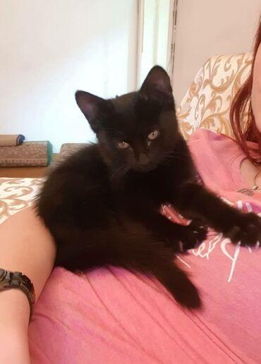 8 объявлений | ЖИВОТНЫЕ: Маленький котик Филин ищет любящих мам и пап. Мальчик славный, 2 месяц
