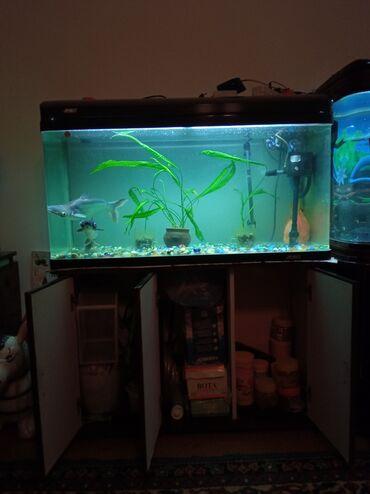 Куплю грунт - Кыргызстан: Продам фабричный аквариум JEBO в отличном состоянии. Хороший подарок