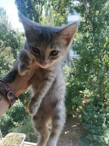 Животные - Аламедин (ГЭС-2): Отдаю двух котят 3-х месячных. Эти малышы много настрадались за всю