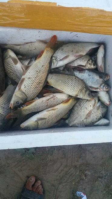 WhatsApp группа рыбаков присоединяйтесь в Бишкек