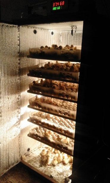 Bakı şəhərində Inkubator 800yumurtalik tam avtomatik inkubator satiram.