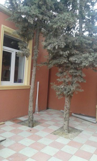 Bakı şəhərində 4 Otaq tam təmirli kursulu yola yaxin bütün komunal var mektebe 100