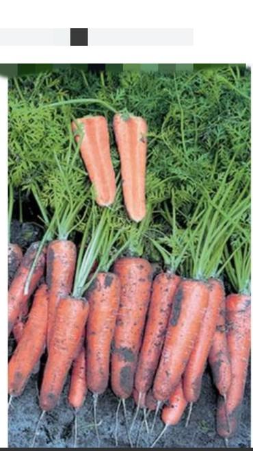 продажа семена в Кыргызстан: Продаю марковь маковка марковки качественные морковка морков