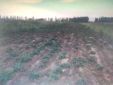 Продам 70 соток Для сельского хозяйства от собственника