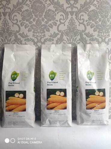 весеннее полупальто в Кыргызстан: Семена: Кукуруза сахарная Г.Ноа фирма Pop Vriend