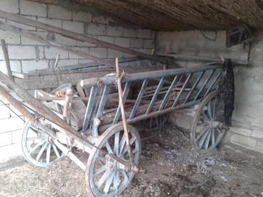 Masallı şəhərində Neftçala rayonu xolqarabucaq kendedi