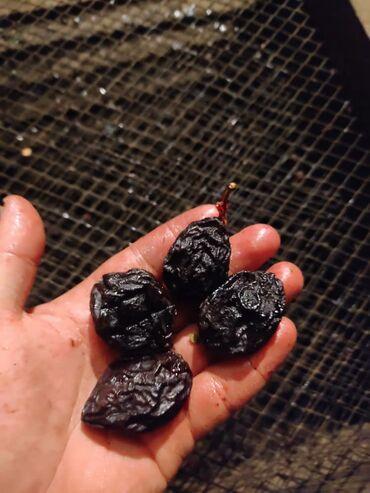 19 объявлений: Кара орук кургатылган сатылыт Талас Бакай Ата