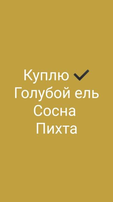 Куплю Сосна Пихта куплю дорого в Бишкек