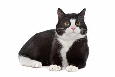 йога для начинающих в Кыргызстан: Ищу студентов-ветеринаров для уколов коту.Ищу студентов ветеринарного