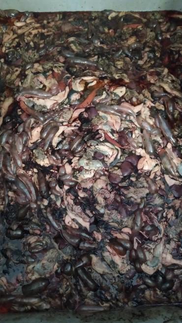 колпачки на когти кошкам в Кыргызстан: Продаю рыбные кишки. Самовывоз! Р-Н Ново-Пакровки ( Волна)