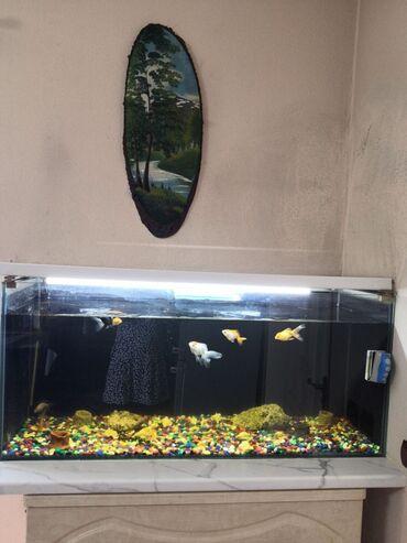 760 объявлений: Продам аквариум на 180 литров